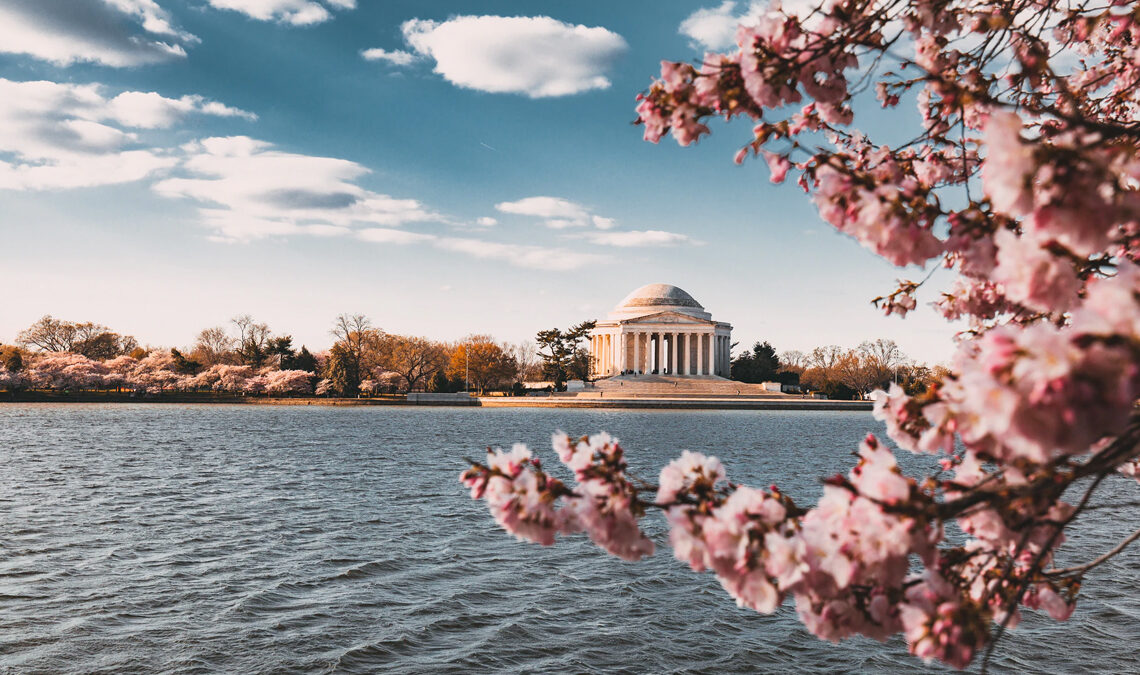Jefferson Memorial with cherry blossoms in the foreground